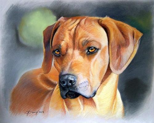 Hundenporträt Pastell auf Papier